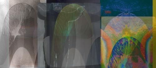 walrus-symphonicaweb